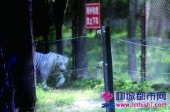 八达岭野生动物园猛兽区重开 曾有游客下车后遭老虎袭击