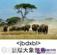 劲爆大象部落是什么意